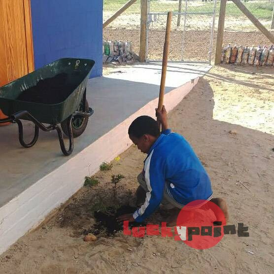 Planting indigenous flowers along the main entrance pathway