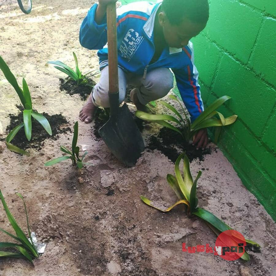 Youth planting indigenous flowers